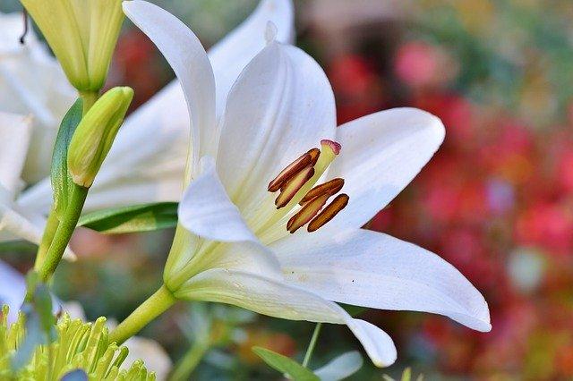 の 花粉 ユリ